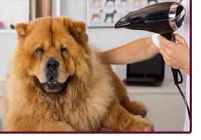 Гигиенический комплекс для собак