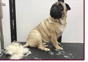 Экспресс линька для собак с гигиеной