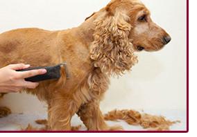 Комплекс груминга со стрижкой собаки весом 10-20кг