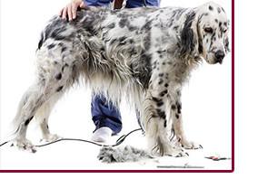 Комплекс груминга со стрижкой собаки весом от 20 кг