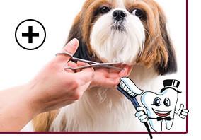 УЗ Чистка зубов собаке (весом до 10 кг, рост в холке до 30 см) без наркоза + Комплекс груминга со стрижкой