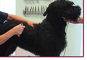 Комплекс груминга с триммингом собаки весом > 20 кг
